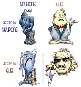 Cartoon comparison of neurons and glia