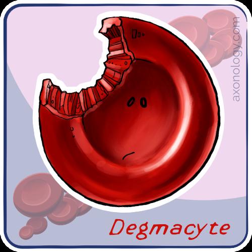 degmacyte